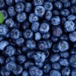 Blueberries as background with one little green le...