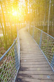park iron chain bridge in bamboo forest