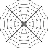 Spider web on a white background vector