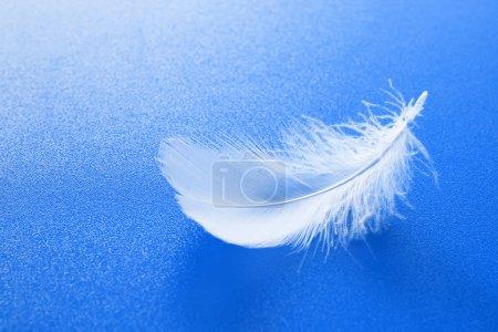 Photo pour Une petite plume blanche sur fond bleu texturé - image libre de droit