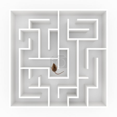 Mouse in maze
