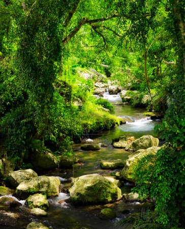 Photo pour Cours d'eau dans la forêt tropicale . - image libre de droit