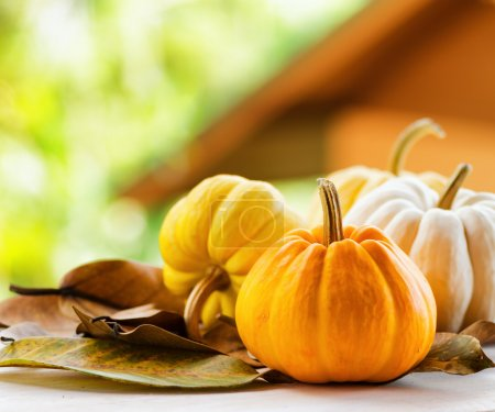 Pumpkins on rural landscape background