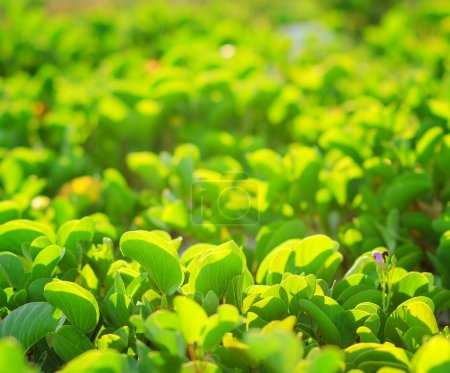 Photo for Green fresh leaves on natural background. - Royalty Free Image