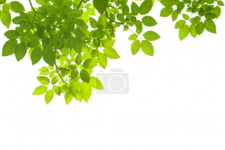 Photo for Leaves background - Royalty Free Image
