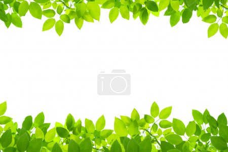 Photo for Green leaves on white background - Royalty Free Image