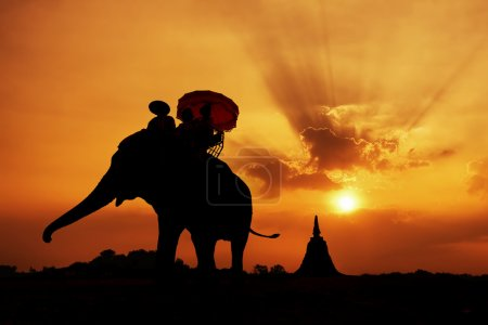 Photo for Silhouette of Elephant with Sunset - Royalty Free Image