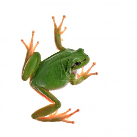Frogfrog