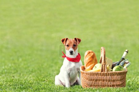 Photo for Picnic basket on green lawn - Royalty Free Image