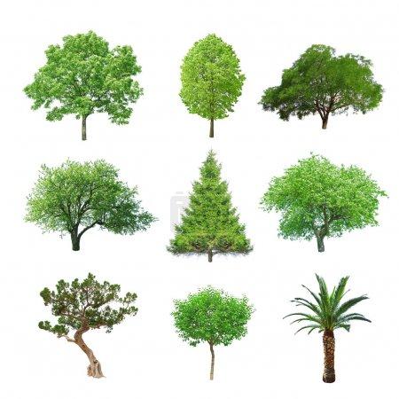 Photo pour Ensemble de différents arbre isolé sur blanc - image libre de droit