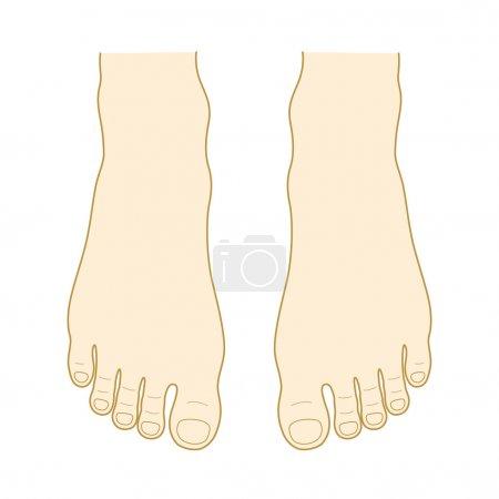 Illustration pour Le haut du pied. Instep et orteil . - image libre de droit