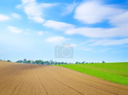 Photo for Field - Royalty Free Image