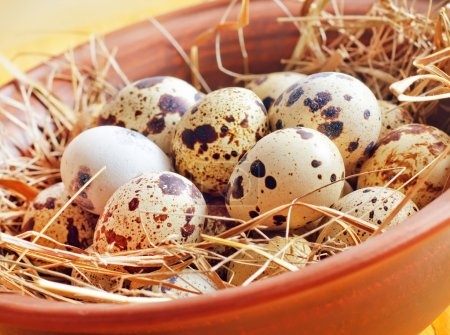 Photo for Raw guail eggs - Royalty Free Image