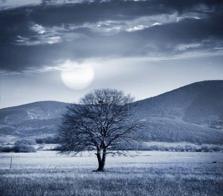 Un árbol y luna llena