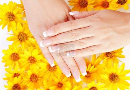 Photo pour Français manucure sur les mains de femme sur fond de fleurs jaunes - image libre de droit