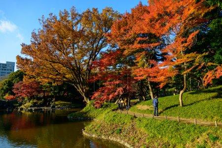 Photo pour Le jardin Koishikawa Korakuen est l'un des plus anciens et des meilleurs jardins japonais de Tokyo. Le jardin est attrayant tout au long de l'année, en particulier à la fin novembre et au début décembre pendant la saison des couleurs d'automne . - image libre de droit