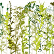 Natural wild plants and weeds silhouettes set – ...