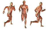 Muscle man at run