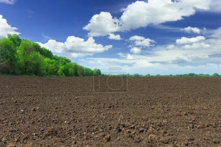 Foto de Campo de granja - Imagen libre de derechos