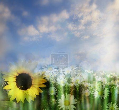 Photo pour Fleurs et ciel printemps fond - image libre de droit
