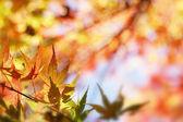 "Постер, картина, фотообои ""Осень"""