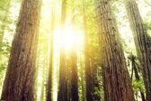 """Постер, картина, фотообои """"Forest light"""""""