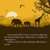 Divoká Africká zvířata siluety plakát