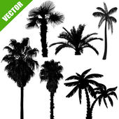 Set of palm tree silhouettes on white background vector illustration