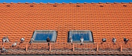 Photo pour Souillés par des toits de crottes d'oiseau et les fenêtres des maisons - image libre de droit