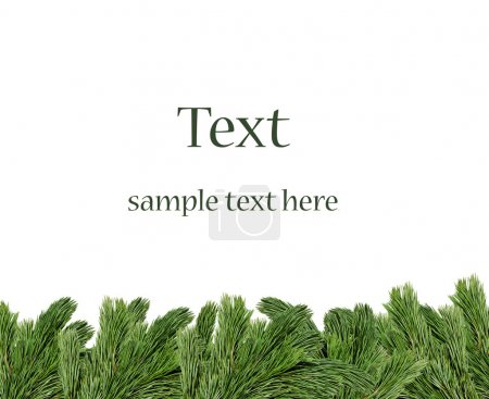 Photo for Christmas tree branches border over white background (with sample text) - Royalty Free Image