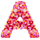 Letter A made from colorful petals rose