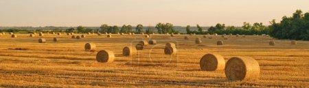 Hay-roll  in golden field landscape