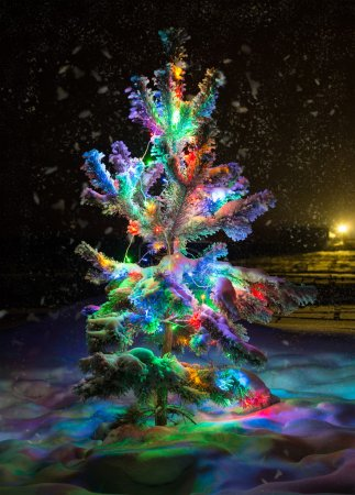 Photo for Shining lights of a natural Christmas tree covered snow - Royalty Free Image