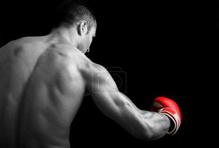 Photo pour Chasse de jeune boxeur sur fond noir - image libre de droit