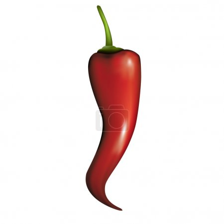 Hot paprika vector