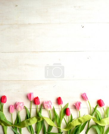 Colorful tulips with yellow green ribbon