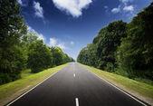 Asphalt road in green forest.
