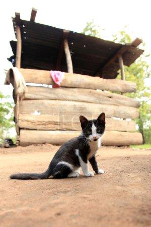Kitten - Remote Western Uganda