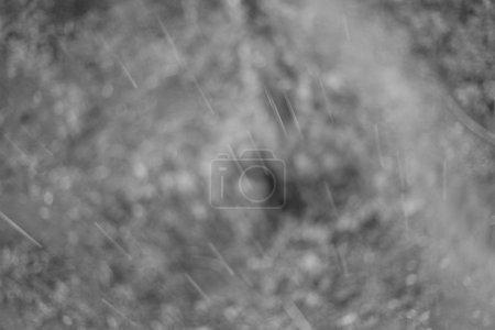 Photo pour Pluie tombant sur les zones humides de Bigodi en Ouganda - La perle de l'Afrique - image libre de droit