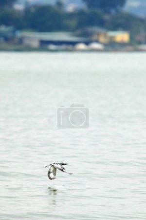 Kingfisher - Wildlife Sanctuary, Game Reserve - Ug...