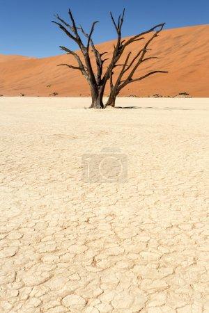 Photo for Dead Vlei - Sossusvlei in the Namib Desert, Namibia, Africa - Royalty Free Image