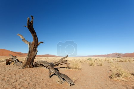 Dead Tree at Sossusvlei, Namibia