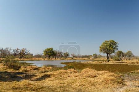 Okavango Delta - Moremi N.P.