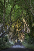 The Dark Hedges, North Irland