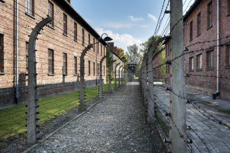 Photo pour BRZEZINKA, POLOGNE - 13 OCTOBRE 2012 : Clôture barbelée dans le camp de concentration d'Auschwitz II. Le camp de concentration d'Auschwitz est un site commémoratif important pour les victimes de l'holocauste de la Seconde Guerre mondiale. - image libre de droit