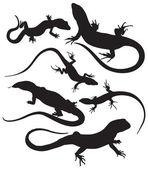 vector lizards