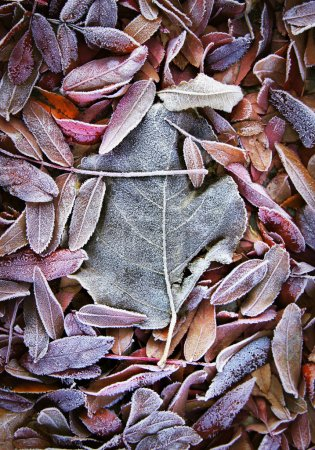 Background of fall dead leaves