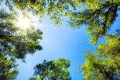 Korunách stromů rámování slunné modrou oblohu