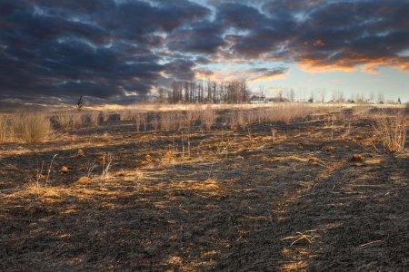 Meadow black charred