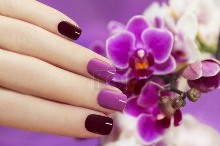Photo pour Deux Tone fashion nails part féminine avec des orchidées. - image libre de droit